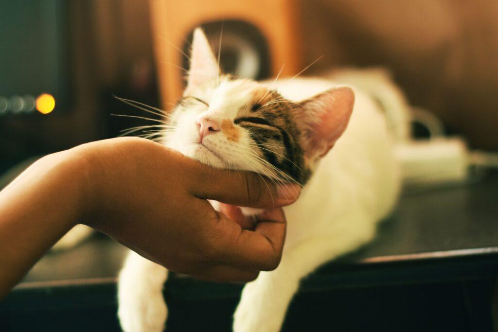 lieve kat